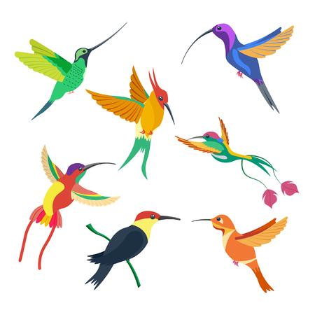 small bird hummingbird set illustration isolated on a white background
