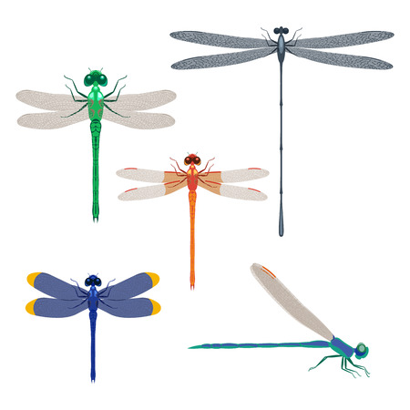 Dragonfly insects set illustration isolated on a white background