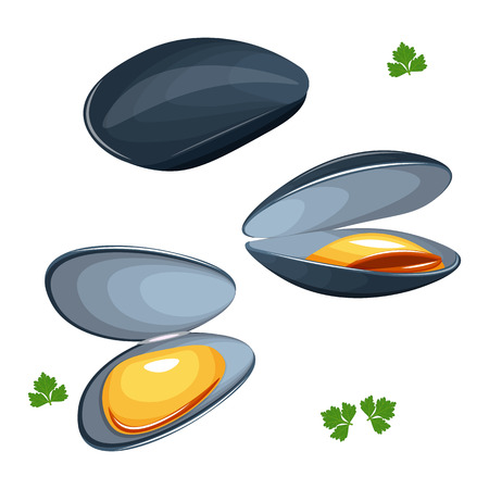mussels vector illustration isolated on a white background