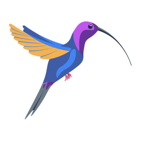A bright multicolored hummingbird, a bird painted in several colors blue orange purple. Vector illustration isolated on white background.