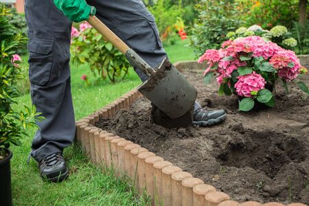 a garden: a man plants a tree