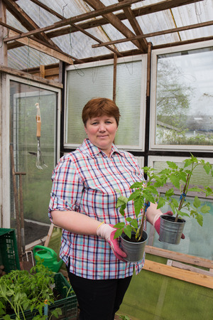 Pull tomato plants Themselves Reklamní fotografie - 55317409