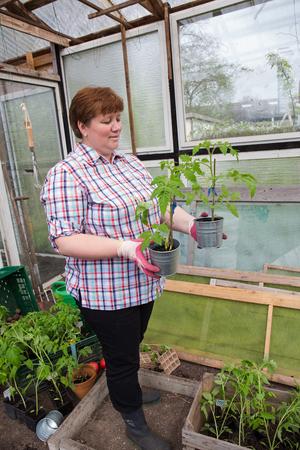 Pull tomato plants Themselves Reklamní fotografie - 55317405