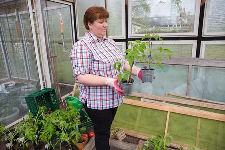 Trek tomatenplanten Themselves Stockfoto