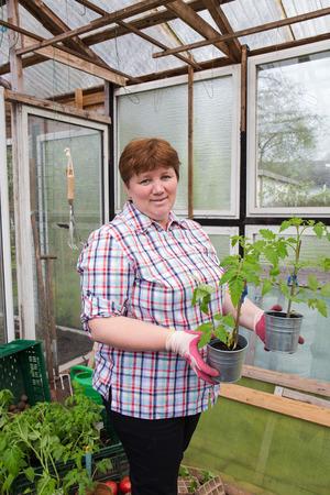 Pull tomato plants Themselves Reklamní fotografie - 55317411