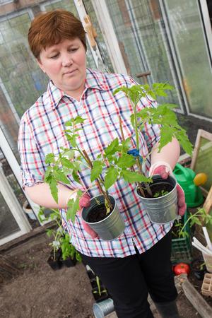 Pull tomato plants Themselves Reklamní fotografie - 55317414