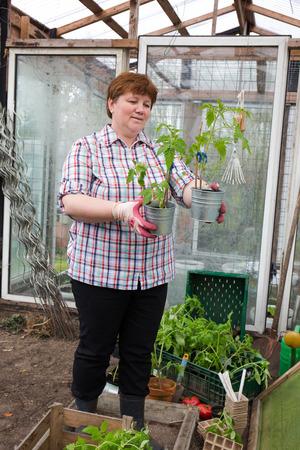 Pull tomato plants Themselves Reklamní fotografie - 55317415