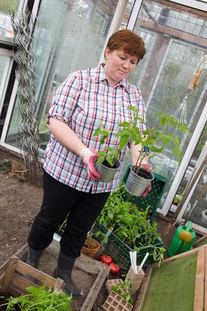 Pull tomato plants Themselves Reklamní fotografie - 55317418