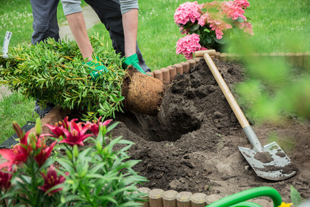 jardineros: Un joven que trabaja en el jardín