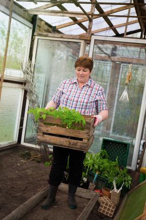 Trek tomatenplanten zichzelf Stockfoto