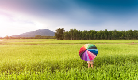 Colorful umbrella in the green rice field from top eye view photo with outdoor sunlight lighting.