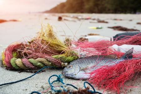 Death fish on the beach with dirty plastic garbage photo with outdoor low sunset lighting. Stock Photo