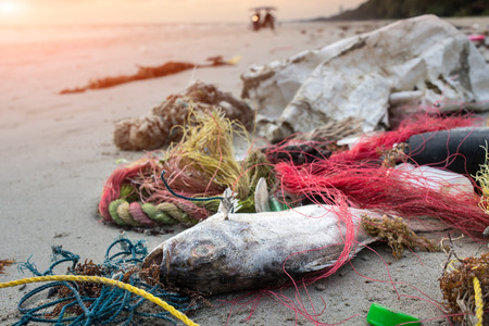 Death fish on the beach with dirty plastic garbage photo with outdoor low sunset lighting. Archivio Fotografico