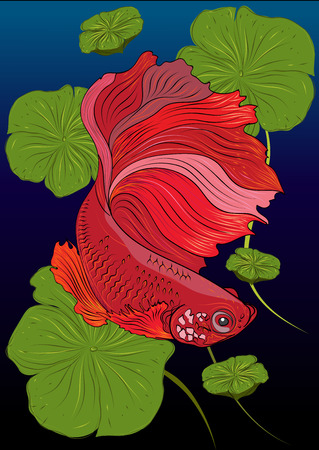 Vector color drawing of  betta or simese fighting fish illustation.