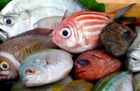 Mezcle coloridos peces de mar del mercado pesquero con iluminación de estudio.