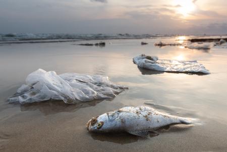 Todesfische und Plastikmüll am Strand in Verschmutzungsmeerlandschaft mit Sonnenlicht.