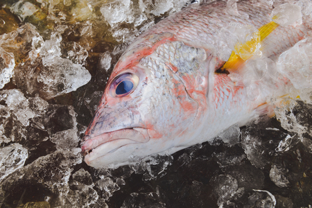 Fresh red snapper sea fish from fishery market frozen in ice piece.
