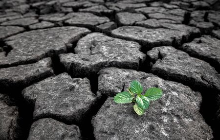 Small plant growing from cracked and dry mud in arid environment land in hope concept with outdoor lighting.