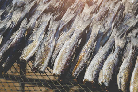 Dried and salty mullet fishes group with sun lighting. Archivio Fotografico