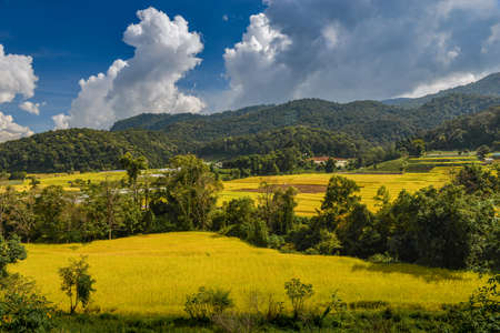 Yellow golden rice terraces field in mouantain view with blue sky and clouds. Banco de Imagens