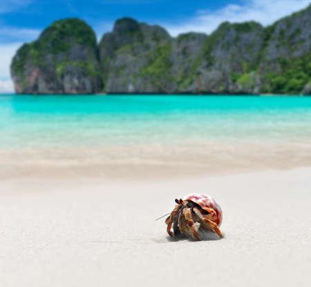Hermit crab walking on the beach and blue sea with sun lighting. 版權商用圖片