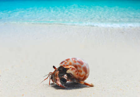 Hermit crab walking on the beach and blue sea with sun lighting. Banco de Imagens