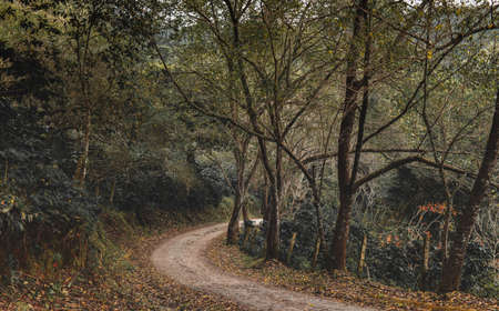 Small road in the forest with low sun lighting and dark shadow.