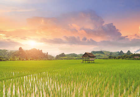 Rice paddy field lanscape with warm sky color sunrise lighting.