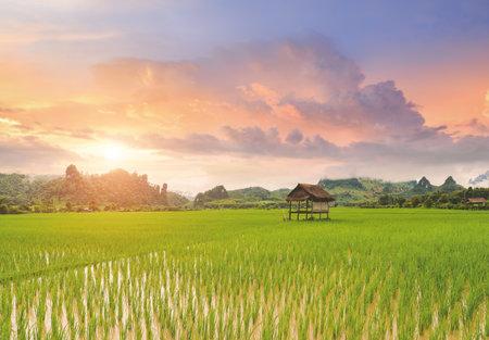 Rice paddy field lanscape with warm sky color sunrise lighting. 版權商用圖片 - 164056192