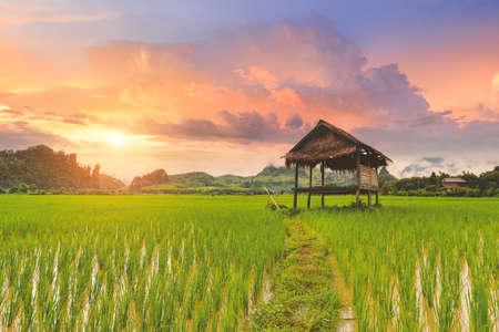 Rice paddy field lanscape with warm sky color sunrise lighting. 版權商用圖片 - 163963471