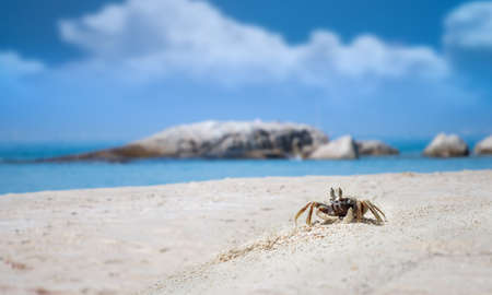Ghost crab on the sand with sea beach landscape view with outdoor sun lighting.