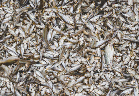 A lot of small river fishes in fishery market.
