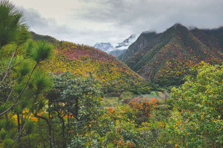Autumn leaves in the mountain view lanscape with grey rain cloud low lighting.