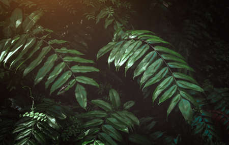 Tropical leafs in low and dark shadow with warm sun lighting and grey tone.