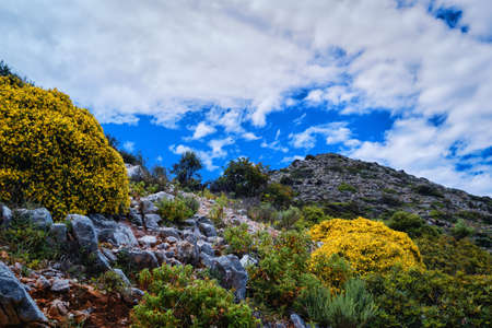Typical beautiful landscape of Crete island, Greece. Fresh spring foliage, flowers bloom. Blue sky, hills and mountains. Selective focus Reklamní fotografie