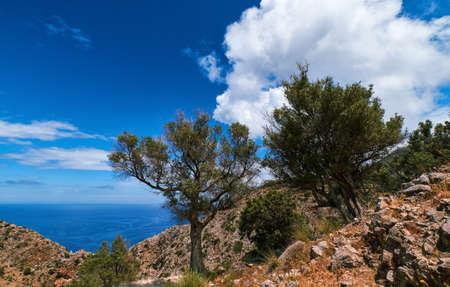 Typical Greek or Cretan landscape, hills, mountain, spring, bushes. Olive tree, paved rocky path. Clear blue sky, clouds, sea. Akrotiri, Crete, Greece