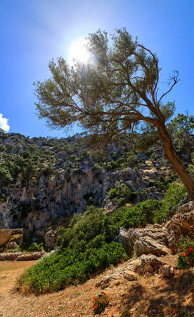 Typical Greek landscape, mountains, spring, bushes, rocky road. Olive tree shot against sun. Clear blue sky. Akrotiri peninsula, Chania, Crete, Greece