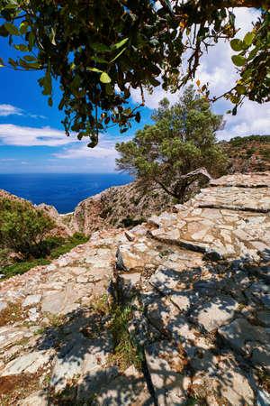 Typical Greek landscape. Paved path, hills, bushes. Big olive, mastic or laurel tree. Blue sky, beautiful clouds. Sea. Akrotiri, Chania, Crete, Greece
