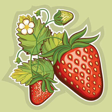 Red strawberries. Illustration for design