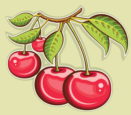 Red cherries  fruits isolated  Vector