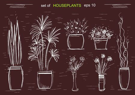 Houseplants on chalk board. hand draw illustration isolated