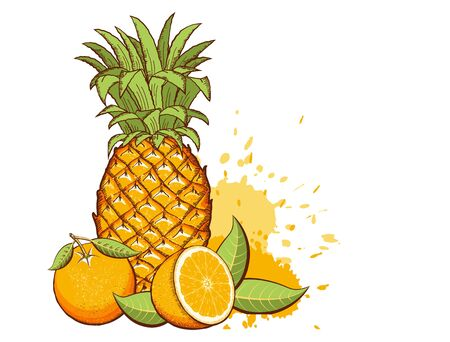 Exotic fruits. Pineapple, Oranges vector color illustration with splash isolated on white background