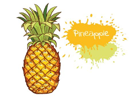 Pineapple. Vector Hand Drawn Fruit illustration isolated on white. Sketch drawing vector illustration with text