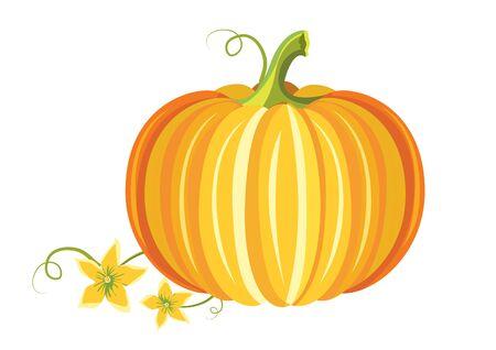 Orange Pumpkin isolated on white background. Thanksgiving pumpkin. Autumn harvest