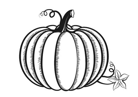 Vector hand drawn pumpkin outline graphic icon. Sketch illustration for print isolated on white background