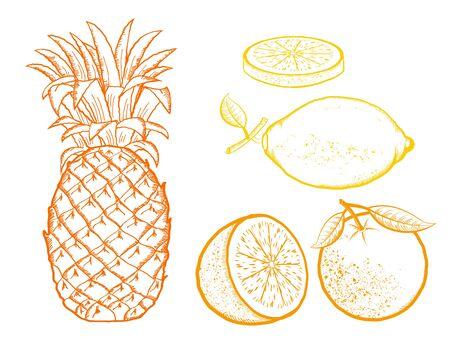 Exotic fruits. Pineapple, Oranges, lemon vector color illustration isolated on white background