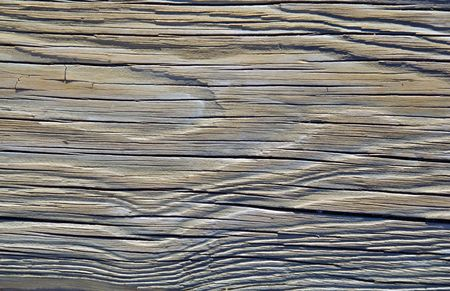 A closeup of the texture of an dried piece of driftwood