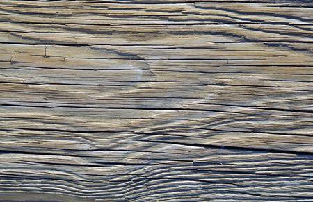 drifts: A closeup of the texture of an dried piece of driftwood