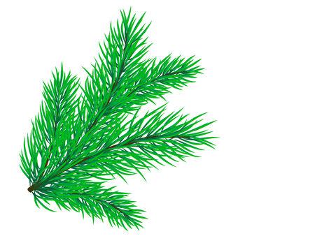 spruce: Rama de hermosos pinos sobre un fondo blanco