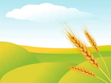 Rural landscape with wheat fields Stock Vector - 14722201